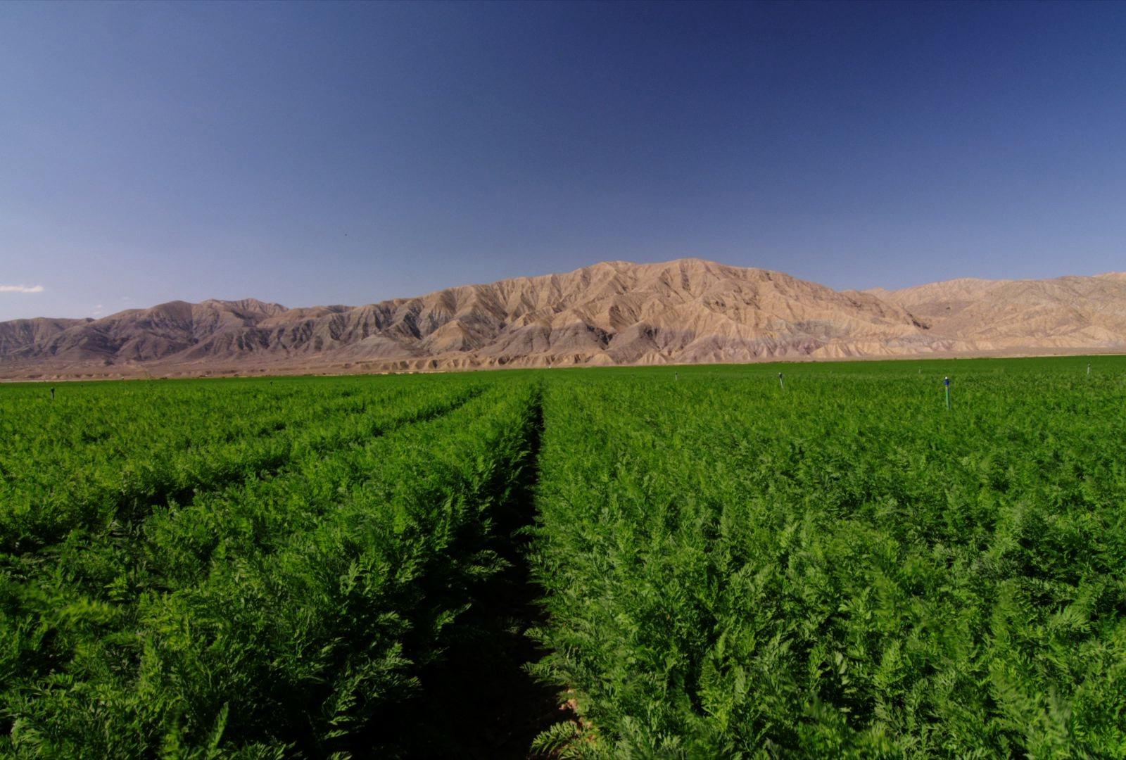 14_field in cuyama_video