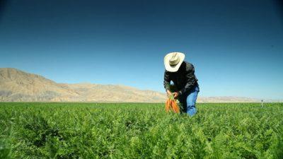 Carrot Farmer